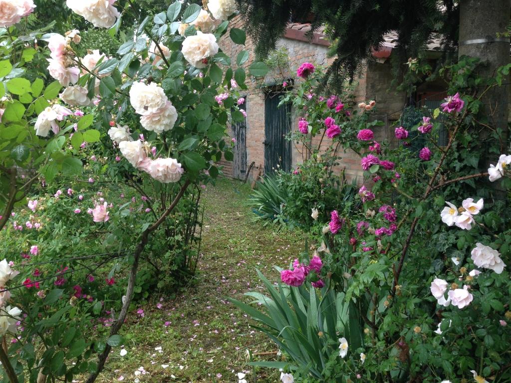 Vivaio Rose Antiche Ravenna